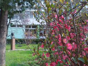 skola u cvijecu